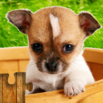 Dogs Jigsaw Puzzles Game 28.3  (MOD, Unlimited Money)
