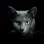 Find a Cat 5.9.2 (MOD, Unlimited Money)