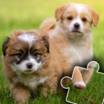 Dogs & Cats Puzzles for kids & toddlers 2 🐱🐩 v2021.48  (MOD, Unlimited Money)
