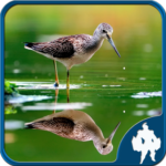 Reflection Jigsaw Puzzles  (MOD, Unlimited Money) 1.9.18